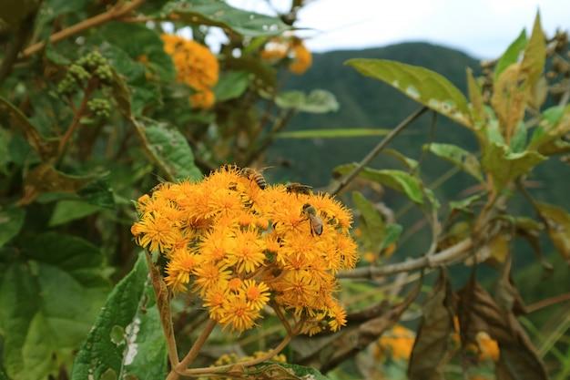 Żółci Dzicy Kwiaty Z Wiele Pszczołami Zbiera Nektar Na Huayna Picchu Górze, Mach Picchu, Peru Premium Zdjęcia