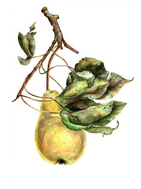 Żółta bonkreta na gałąź z zielonymi liśćmi. akwarela ilustracja. Premium Zdjęcia