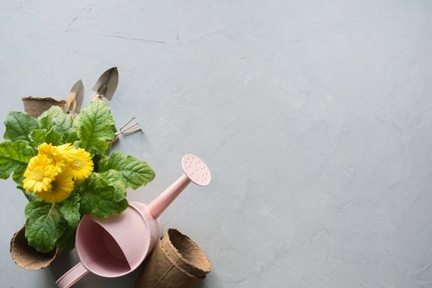 Żółta Gerbera, Opłaty Za Przejazd I Roślina Ogrodowa Na Szaro. Premium Zdjęcia