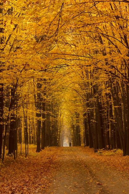 Żółta Lipowa Aleja Zachmurzył Jesienny Dzień Premium Zdjęcia