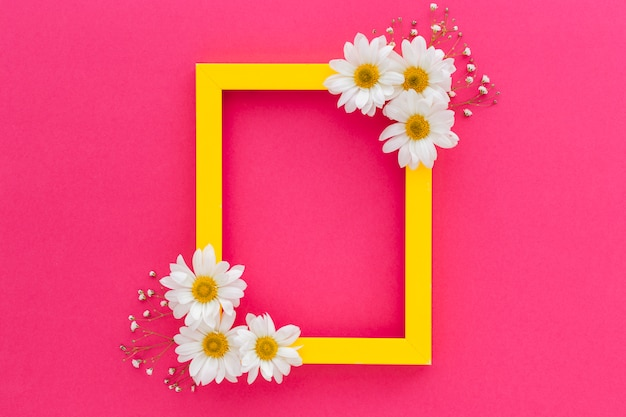 Żółta ramka ozdobiona białą stokrotką i kwiatami oddechu dziecka na różowej powierzchni Darmowe Zdjęcia