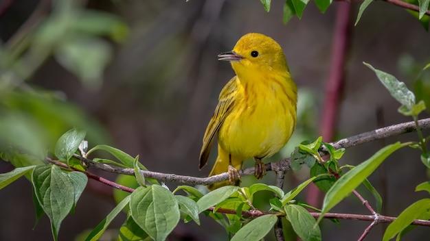 Żółta Wodniczka Darmowe Zdjęcia