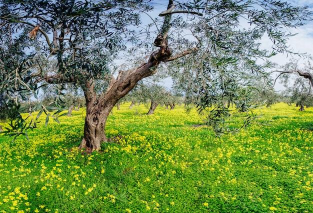 Żółte kwiaty w ogrodzie Premium Zdjęcia