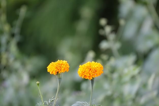 Żółte Kwiaty Darmowe Zdjęcia