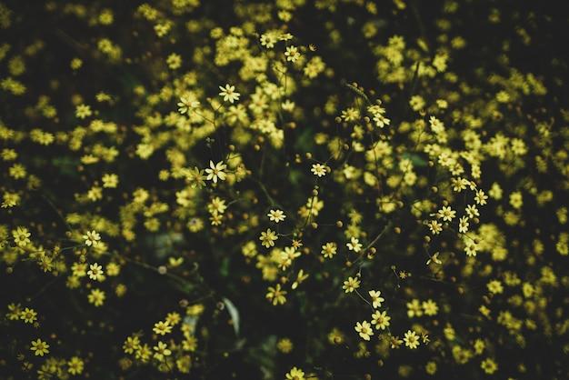 Żółte kwiaty Premium Zdjęcia