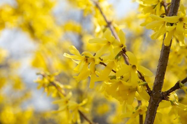 Żółte, Pomarańczowe Piękne Jesienne Liście W Pięknym Jesiennym Parku Premium Zdjęcia