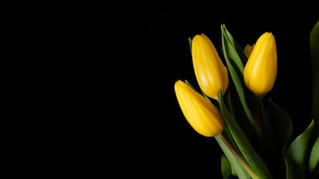 Żółte Tulipany Miejsce Darmowe Zdjęcia