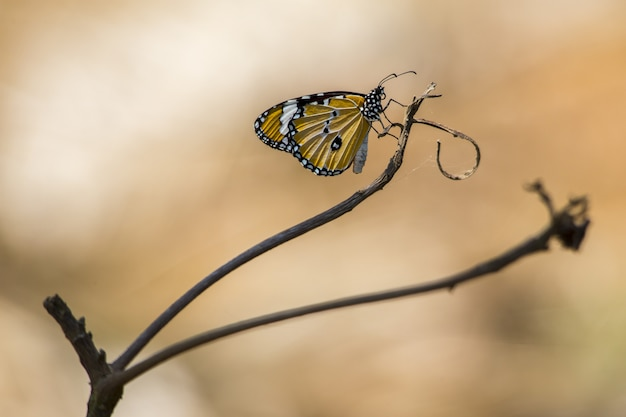 Żółto-czarny Motyl Na Brązowej łodydze Darmowe Zdjęcia
