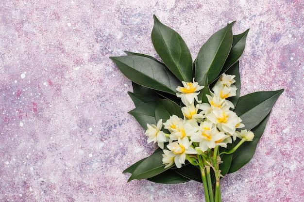 Żółty Biały żonkil, Narcyz, Jonquil Kwiat Na Jasnym Tle. 8 Marca Dzień Kobiet. Darmowe Zdjęcia