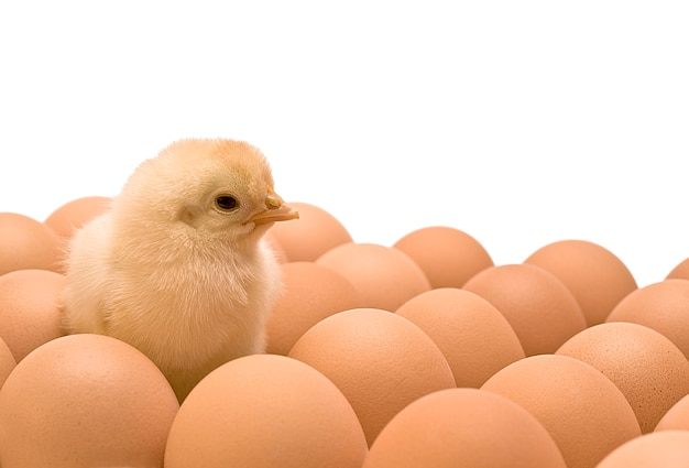 Żółty kurczak Premium Zdjęcia