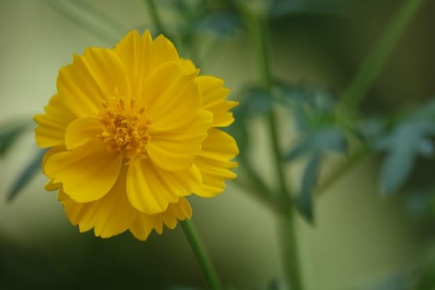 Żółty Kwiat Na Niewyraźne Tło Darmowe Zdjęcia