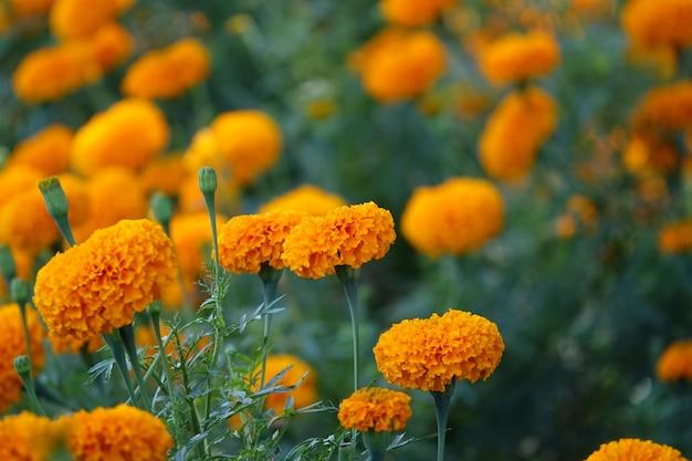 Żółty Kwiat Na Tle żółtych Kwiatów Nieostry Darmowe Zdjęcia
