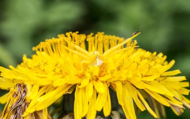 Żółty Owad Na żółty Kwiat Z Bliska Darmowe Zdjęcia