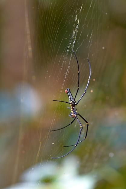 Żółty pająk w sieci Premium Zdjęcia
