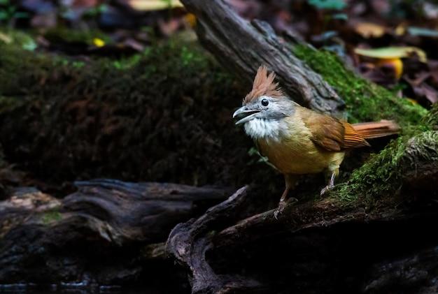 Żółty Ptak Perching Na Gałązce Premium Zdjęcia