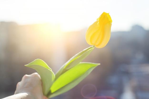Żółty tulipanowy kwiat Premium Zdjęcia