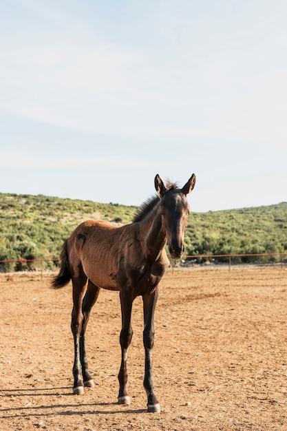 Źrebię Koni Pełnej Krwi W Polu Trawy Darmowe Zdjęcia