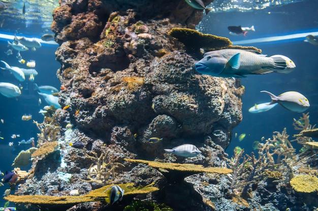 Życie Morskie. Koral I Ryby Morskie W Podwodnym środowisku Premium Zdjęcia