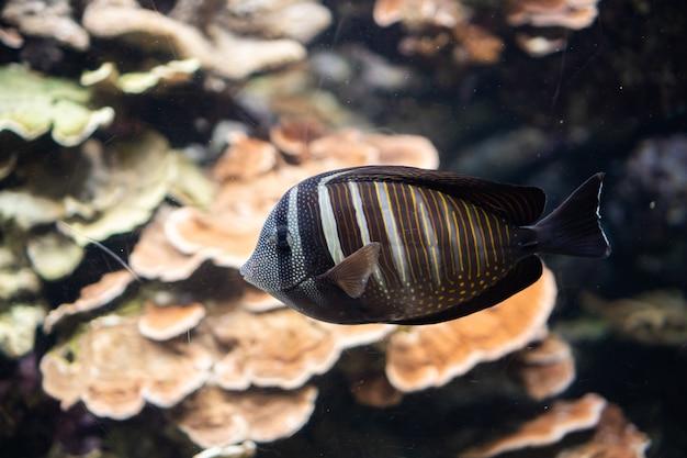 Życie Morskie, Ryby Morskie Pływające W Wodzie W Podwodnym środowisku Premium Zdjęcia