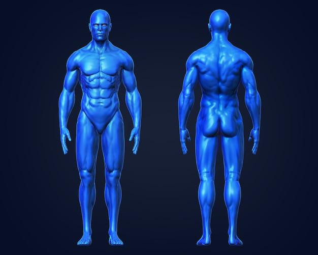 3d, músculo humano conceptual, frente y parte posterior del hombre ...