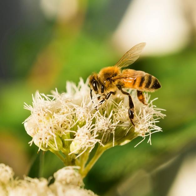 Abeja buscando polen Foto gratis