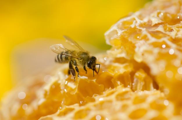 Abejas obreras en celdas de miel. Foto Premium
