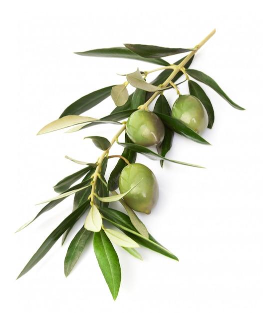 Aceitunas en rama con hojas Foto Premium