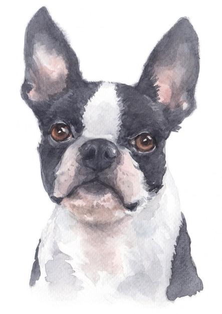 Acuarela de boston terrier Foto Premium