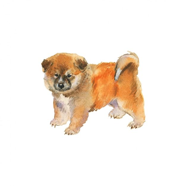 Acuarela cachorro akita. retrato de perro realista dibujado a mano. pintura ilustración de mascotas en blanco Foto Premium