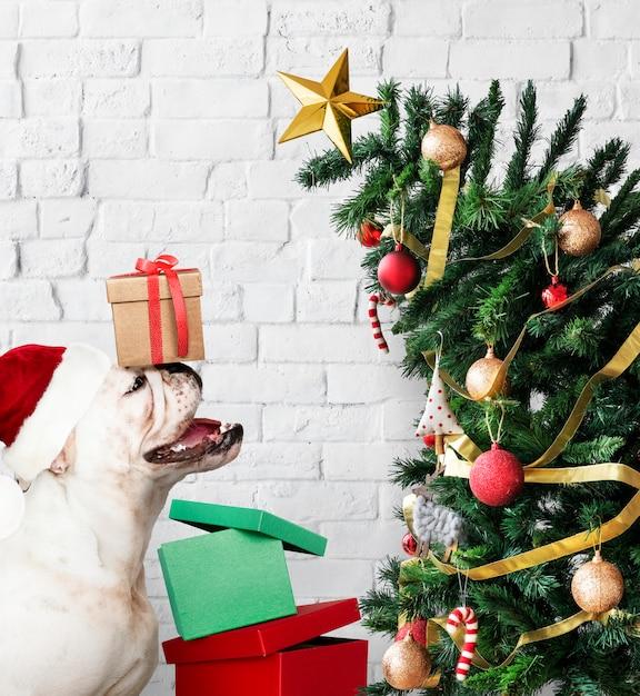 Adorable bulldog cachorro de pie junto a un árbol de navidad Foto gratis