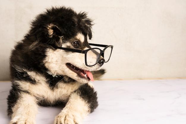 Adorable cachorro con anteojos Foto gratis