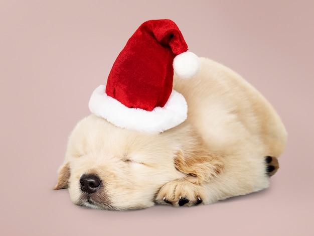 Adorable golden retriever cachorro durmiendo mientras llevaba sombrero de santa Foto gratis