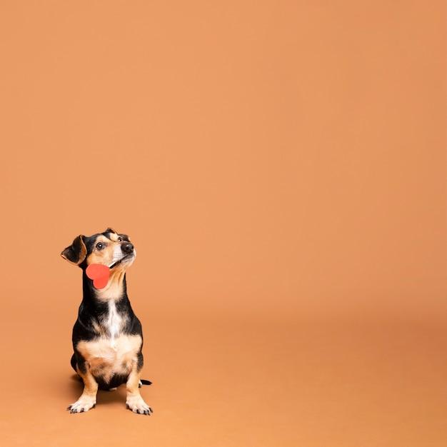 Adorable perrito con espacio de copia Foto gratis