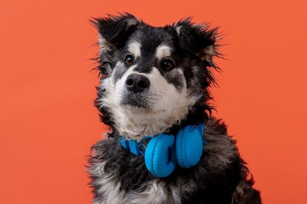 Adorable perro con auriculares en el cuello Foto gratis