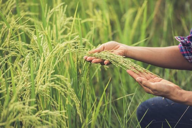 El agricultor tiene el arroz en la mano. Foto gratis