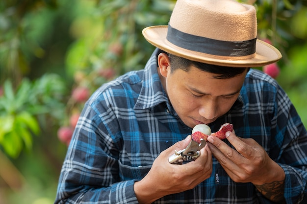 Los agricultores examinan lichi, lichi en el jardín. Foto gratis