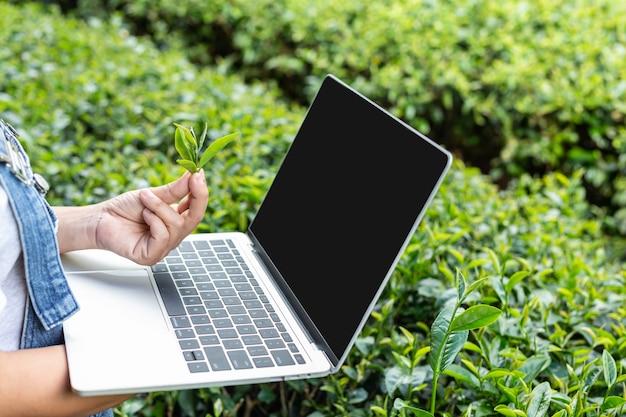 Agricultores con tabletas, compruebe el té, conceptos modernos. Foto gratis