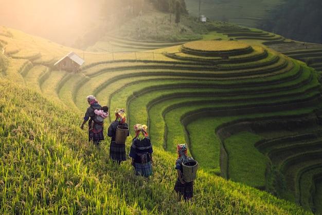 Narodna Republika Kina - Page 7 Agricultores-vietnamitas-caminando-sobre-campo-arroz-puesta-sol_44537-122