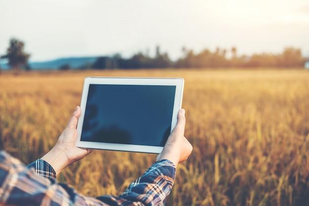 Agricultura inteligente tecnología agrícola y agricultura orgánica mujer utilizando la tableta de investigación y estudiando el desarrollo de variedades de arroz en el campo de arroz Foto Premium