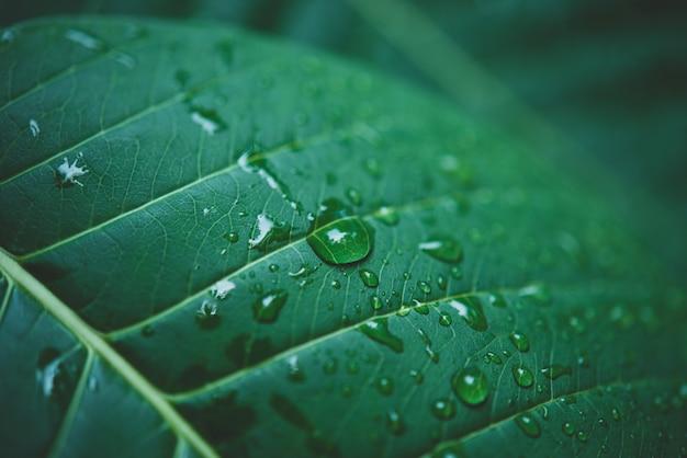 Agua de lluvia en una macro de hoja verde. Foto gratis
