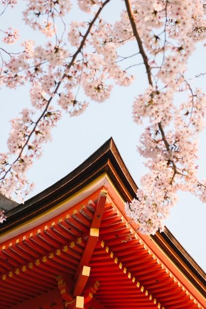 Aguilón del templo y sakura Foto gratis