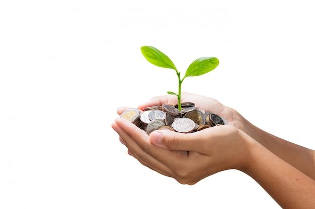 Aislar el árbol joven que crece en la pila de dinero en mano Foto Premium