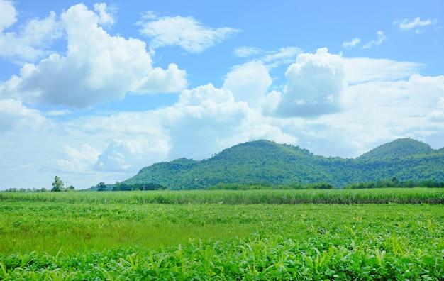 Ajardine la vista de campos agrícolas con el fondo de la montaña y el cielo azul. Foto Premium