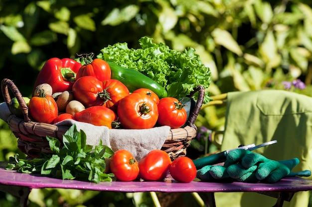 Algunas verduras en una canasta bajo la luz del sol Foto gratis