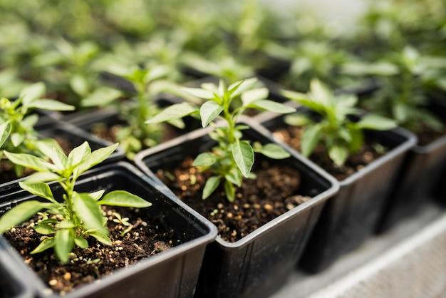 Alto ángulo de plantas en macetas negras Foto gratis