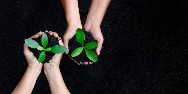 Ambiente día de la tierra en manos de árboles que crecen plántulas. Foto Premium