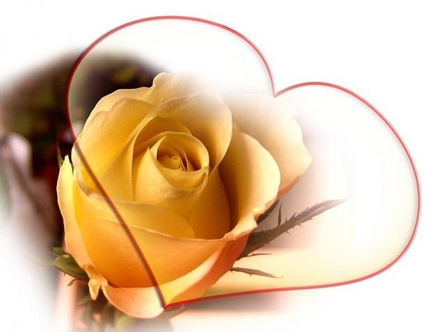 I feel love adassa descargar gratis
