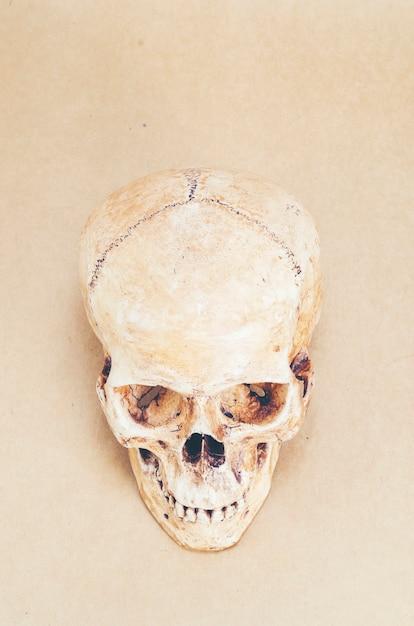 Anatomía del cráneo humano en el fondo | Descargar Fotos premium