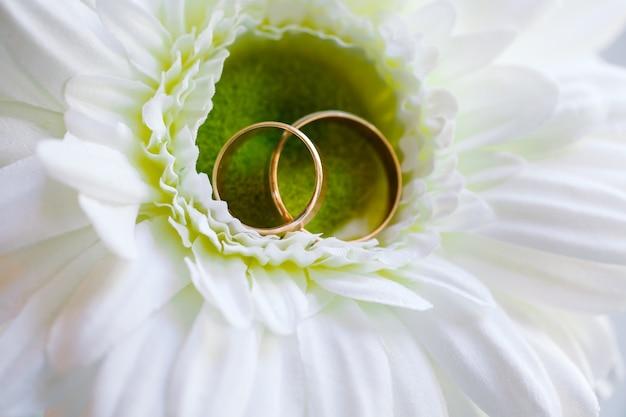 Anillos de boda Foto Premium