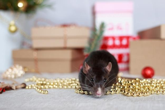Año nuevo chino rata con decoraciones festivas Foto Premium